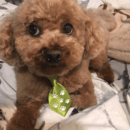 Tiny little dog