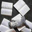 邊睡邊讀書