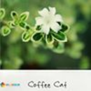 coffeecat66