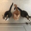 catcat1043