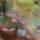 lilyrose631019