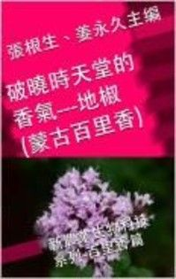 破曉時天堂的香氣- 地椒(蒙古百里香)