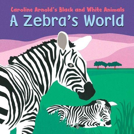Zebra's World