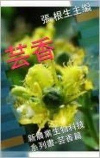 中醫常用抗老化藥材--芸香
