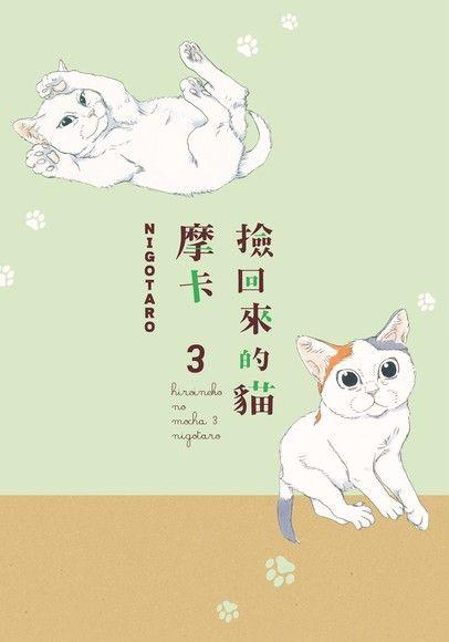 撿回來的貓 摩卡 (3)