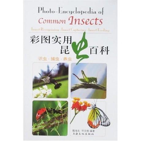彩圖實用昆蟲百科