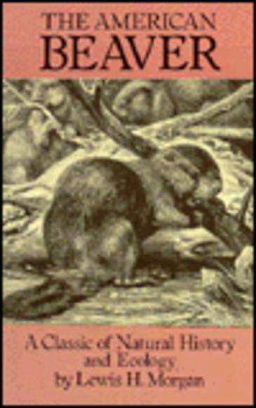 The American Beaver