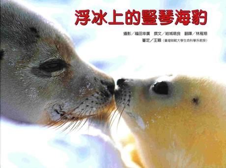 浮冰上的豎琴海豹