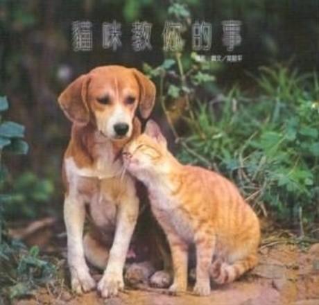 貓咪教你的事
