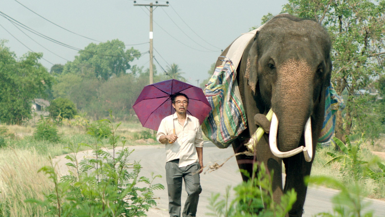 《親愛的大笨象》